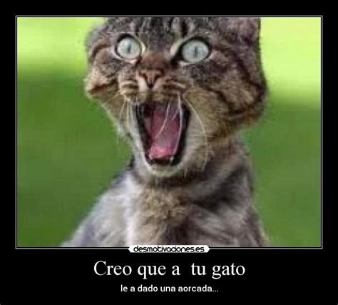 imagenes comicas de locos pin gatitos locos gato loco gatos divertidos chistosos