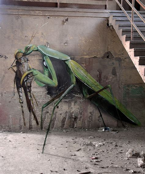 insects  giant birds  graffiti art  mantra