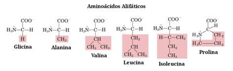 aminoacidos con cadenas alifaticas amino 225 cidos