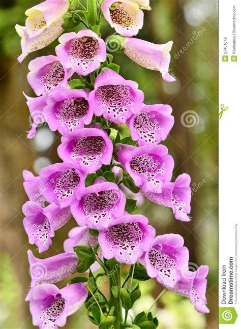 bocca di fiore fiori di bocca di fotografia stock immagine di