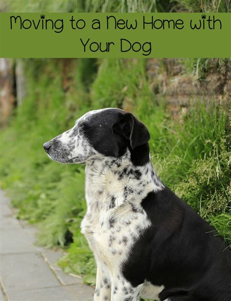 Moving To A New Home With Your Dog Dogvills
