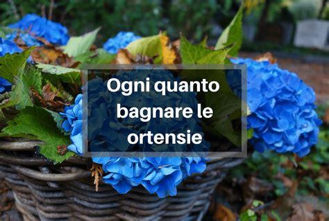 Come Bagnare Orchidee by Come Annaffiare Le Orchidee