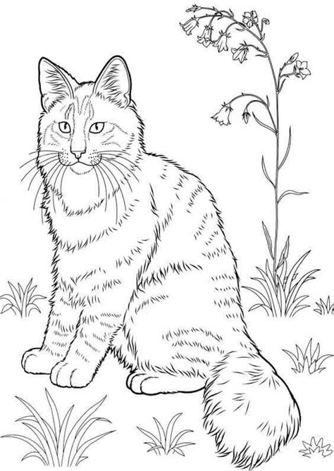 cat coloring sheets 30 free printable cat coloring pages