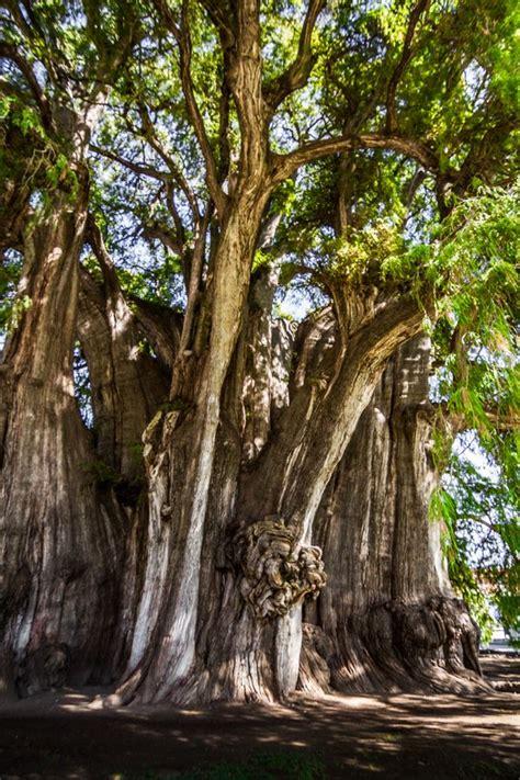 Bonsai Baum Garten 435 by 660 Besten Trees And Roots Bilder Auf G 228 Rten