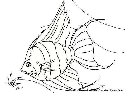 realistic coloring pages tropical fish coloring pages realistic coloring pages