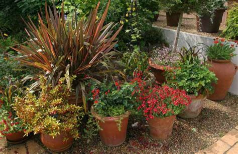 container gardens planting a container garden decoration news