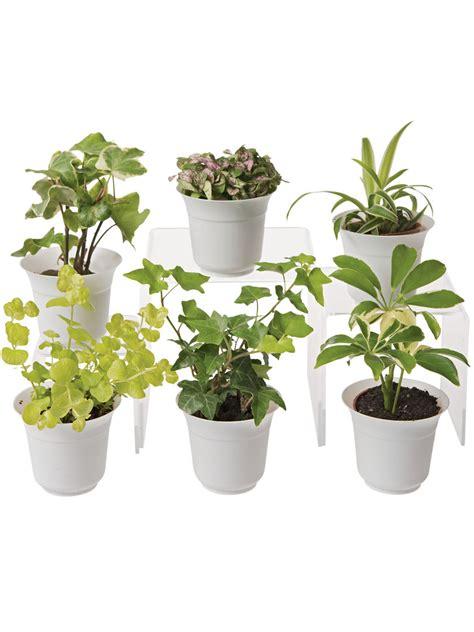 light terrarium plant collection small terrarium