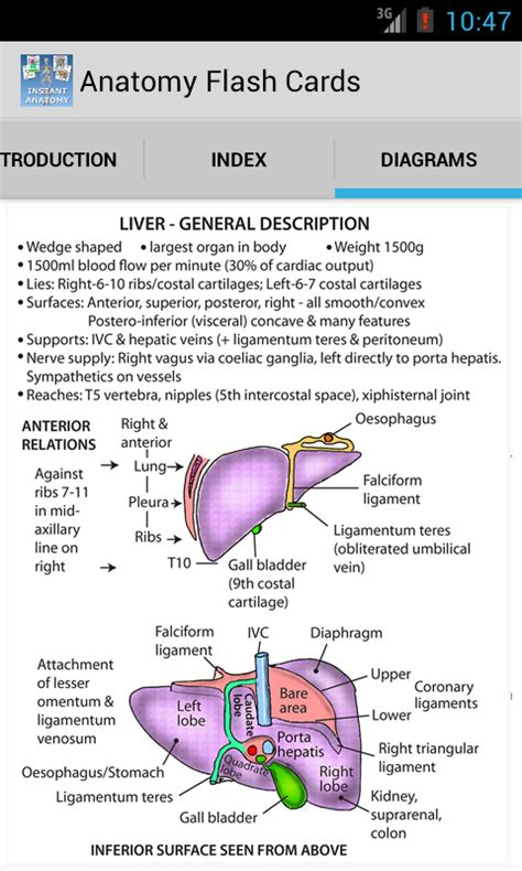 how to make anatomy flash cards anatomy flash cards android apps on play