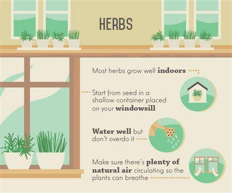 indoor herbs to grow indoor edible plants fix com