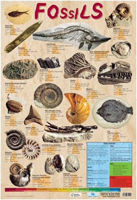 Cheapest Wall Murals fossils educational chart poster buy online