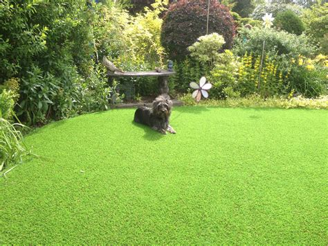do dogs need grass backyard artificial grass for dogs and pets cheshire artificial grass