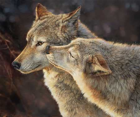bonded pair cascadia wolves books bonnie marris wolf