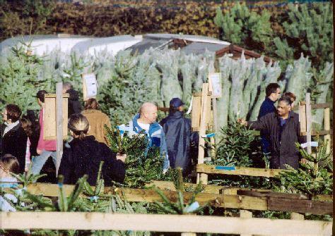 christmas trees at christmas tree farm chesham