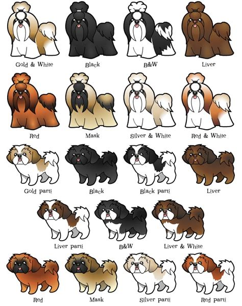 shih tzu age chart shih tzu puppy size chart breeds picture