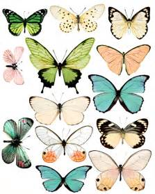 butterfly prints free free butterflies pictures clipart best