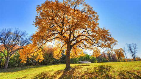 zimmerpflanze große blätter die 75 besten herbstbl 228 tter hintergrundbilder