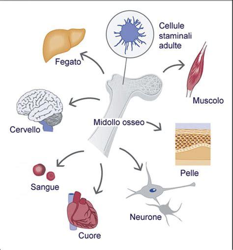 cellule staminali staminali parkinsonitalia it