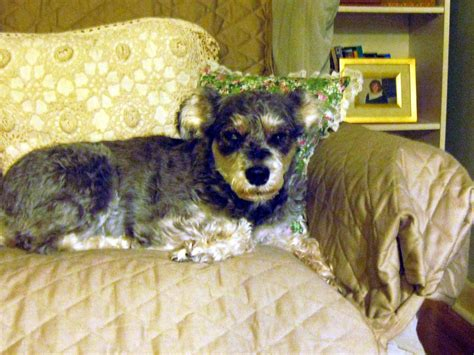 hge in dogs hemorrhagic gastroenteritis or hge a dangerous canine intestinal disease pethelpful