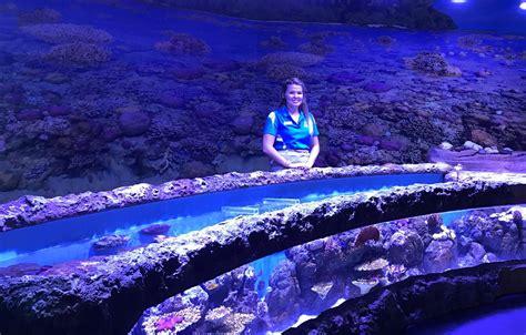 aquarium design brisbane cairns aquarium orphek led light project in australia