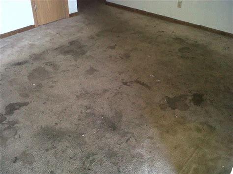 dirt carpet and rug shoo a carpet s dilemma the carpet cleaner