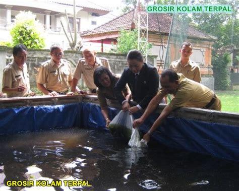 Bibit Lele Remaja budidaya lele kolam terpal agro terpal