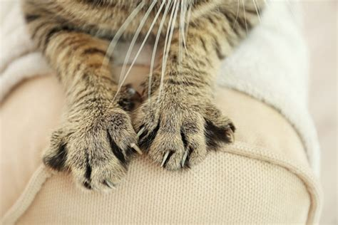 Cats And Leather Furniture by How To Keep Cats From Scratching Leather Furniture