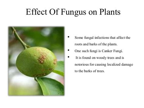 list of fungal diseases in plants effect of fungus on plants