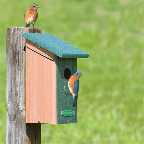 duncraft com duncraft birdsafe bluebird house