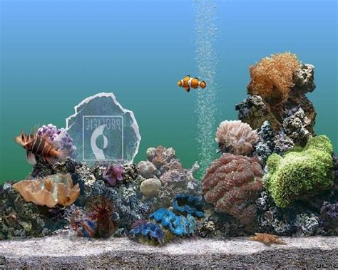 serenescreen marine aquarium download marine aquarium photos