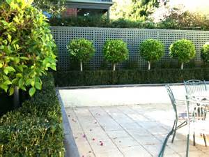 Designing Your Backyard Classic Instant Hedges By The Metre Installed In Minutes