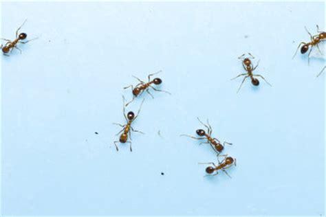 Wie Wird Ameisen Los 3756 by Zimt Gegen Ameisen So Werden Sie Die Insekten Auch Ohne