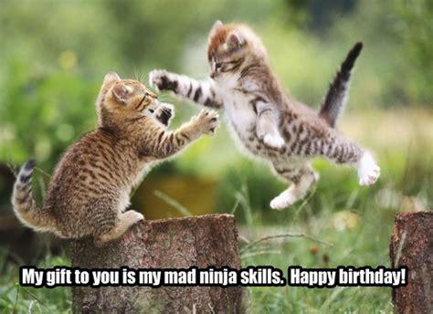 Happy Garden Fall River Ma - ninja cat 3 2 flash games