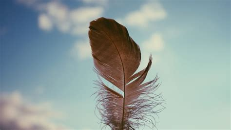 best wallpapers feather download hd wallpapers