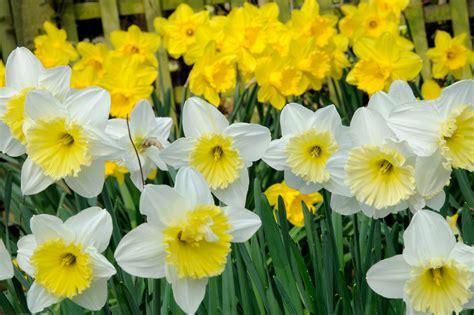 five bulbs for march flowers gardenersworld com