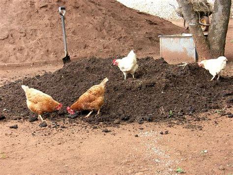Garden Benefits Of Backyard Chickens Growers Supply Chicken Manure Vegetable Garden