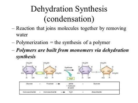 condensation or dehydration unit 1 cellular energetics ppt