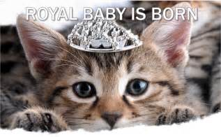 Current event cat of the day royal baby