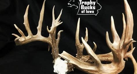 Iowa Records Iowa Archery Whitetail Buck To Be Certified New State Record