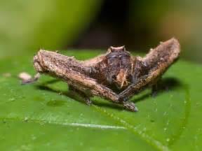 Amazon rainforest animals amazon rainforest animals the crab spider