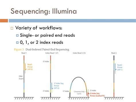 illumina sequencing workflow next generation sequencing of microbial genomes and