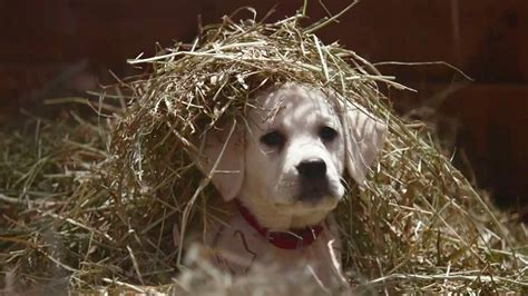 industrial puppy budweiser quot lost quot superbowl 2015 commercial the feels