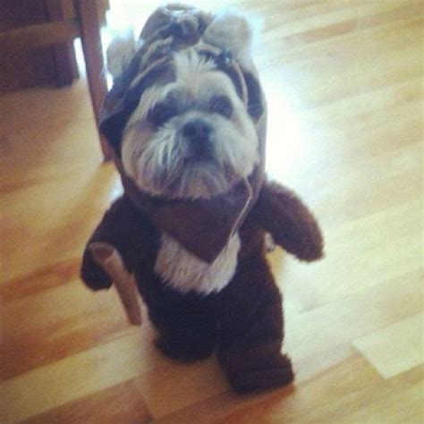 Make Your Day Cutest Pets by 1000 Ideas About Costumes On Puppy