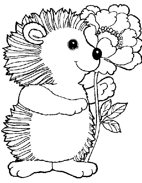 coloring page of a hedgehog hedgehog activities word puzzles hedgehog hidden