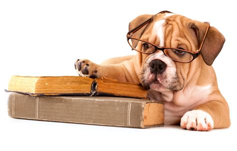 puppy school back to school tips dallasdoglife