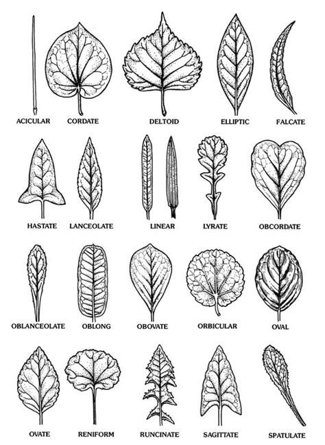trees and their meanings leaf tattoos what do they mean leaf tattoos designs