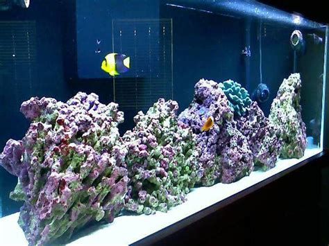 Lu Aquarium Air Laut pencahayaan dalam aquarium air laut fowlr