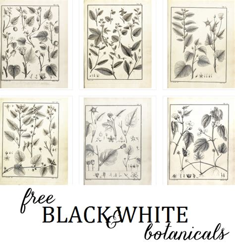 free printable wall art black and white black and white botanical prints pictures to pin on