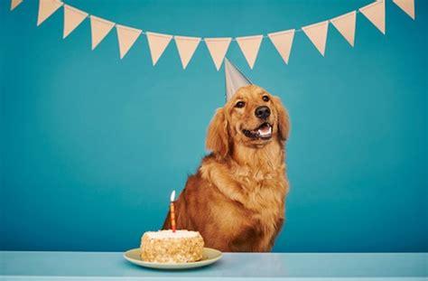 golden retriever birthday happy birthday golden retriever gt 05 best tips to birthday paty