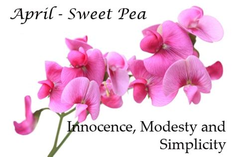 april birth flower tattoo april birth flower sweet pea my family birth flowers