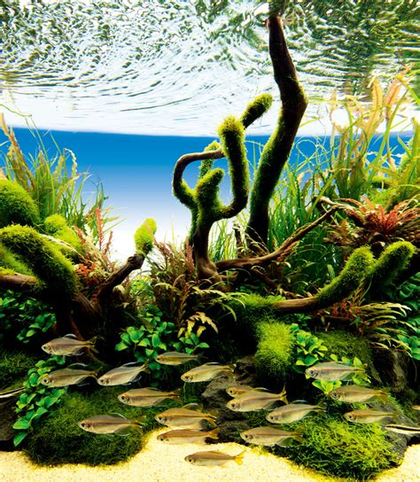 nature aquarium gallery